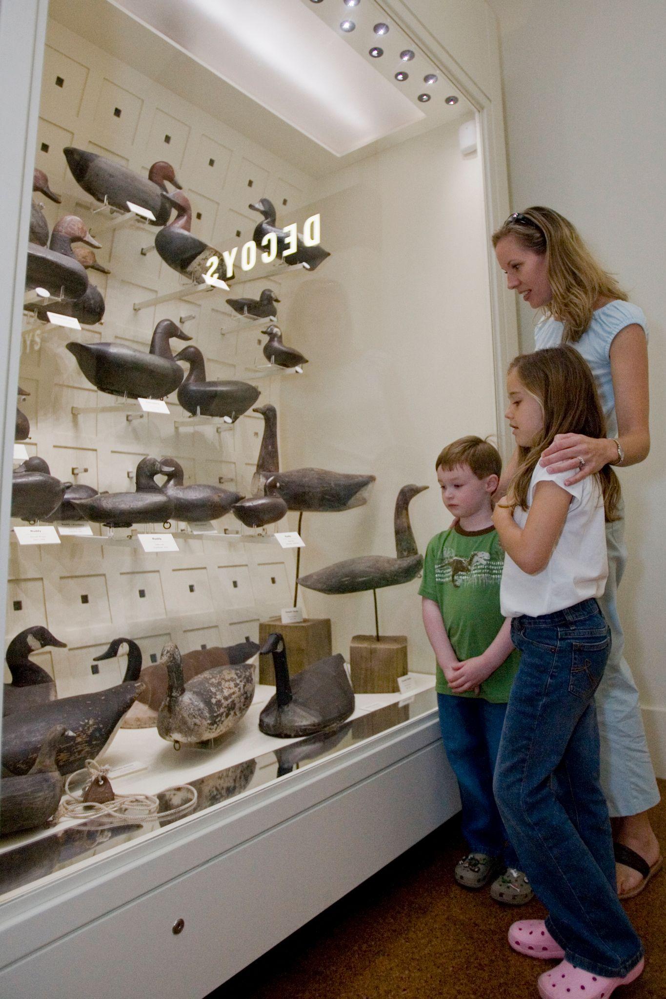 Wildlife education center in historic Corolla